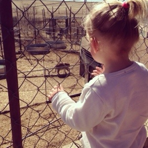 Checking out a tiger at the Wild Animal Sanctuary.